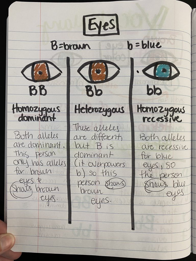 Chart showing eye color and dominance of the trait